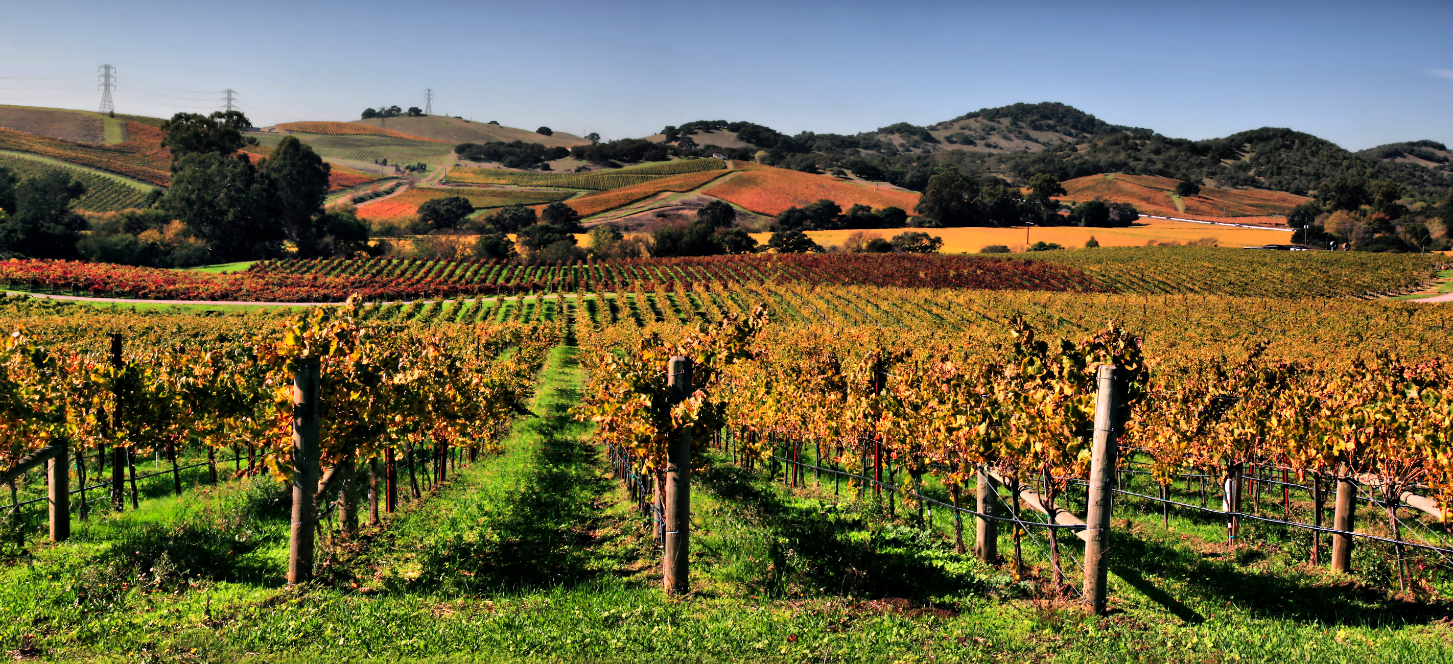 Your Guide To Napa Napa Wineries You Can T Miss Me Want